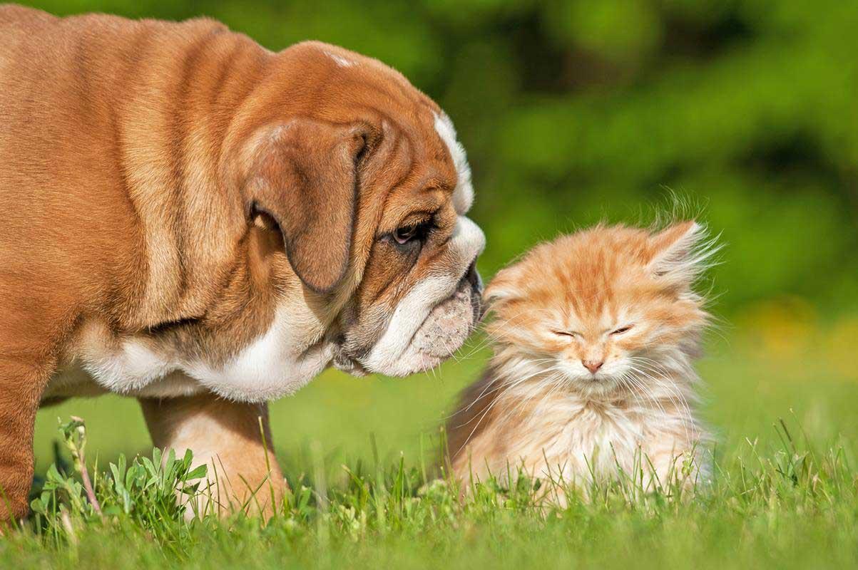 Puppy & Kitten Care  Bowling Green, KY